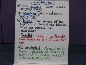 Mealworms3