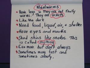 MealwormsChart